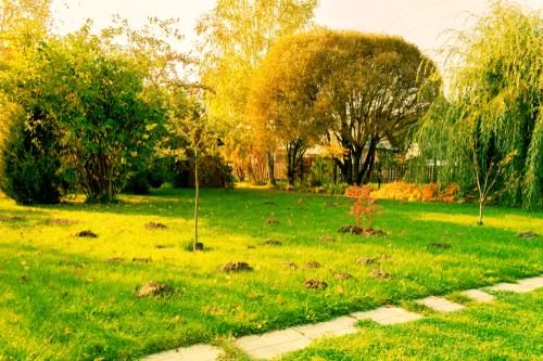 mole hills on a lawn