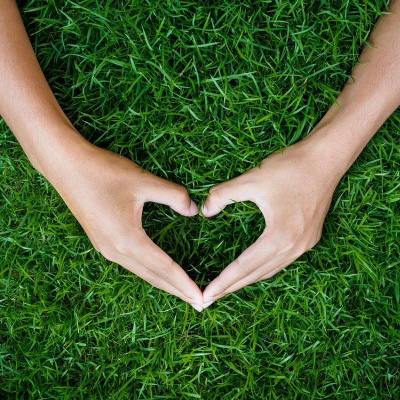 With this guide to a better lawn, you'll be able to finally give your lawn the care and love it needs to stay healthy and beautiful this year.