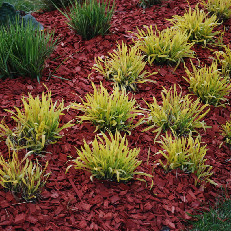 a garden with mulch
