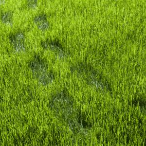 footprints in grass